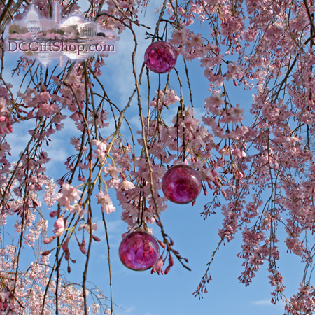 cherry tree blossoms washington dc. Cherry Blossom Glass Balls