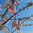 Sakura Peace Glass Balls (Set of 3)