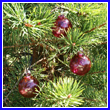 Cranberry Red Glass Balls (Set of 3)