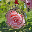 First Lady Mamie Eisenhower Pink Rose Flower Ornament