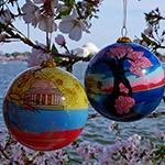 Cherry Blossom 2013 2014 Set