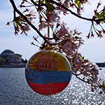 2014 Cherry Blossom Official Ornament