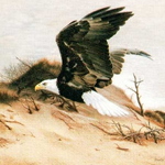 American Eagle by Charles Frace