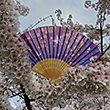 2019 National Cherry Blossom Festival Fan
