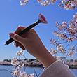 Pink Cherry Blossom Flower Pen