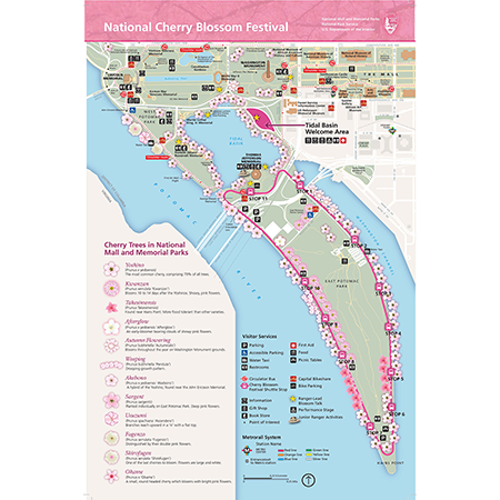 photograph relating to National Mall Map Printable named Countrywide Cherry Blossom Competition Map Print