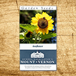 Colonial Sunflower Heirloom Seeds - 3 pack