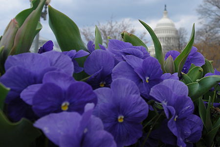 Winter Flowers of the Capitol by Luke Wilbur