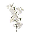 White Silk Yoshino Cherry Blossom Branch